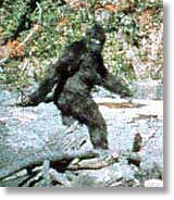 Is 'Bigfoot' roaming around Holy Hill?