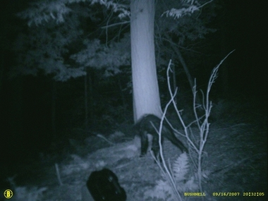 Pa. hunter's images stir Bigfoot debate