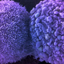 Photo: Scientists Have Used CRISPR to Slow The Spread of Cancer Cells