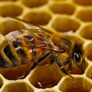 Photo: Europe Bans Bee-Harming Pesticides; US Keeps Spraying