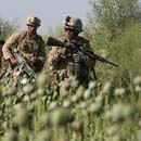Photo: Marines ignore Taliban cash crop to not upset Afghan locals
