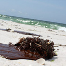 Photo: Oil confirmed on Pensacola beaches